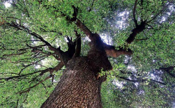 fertilità - albero